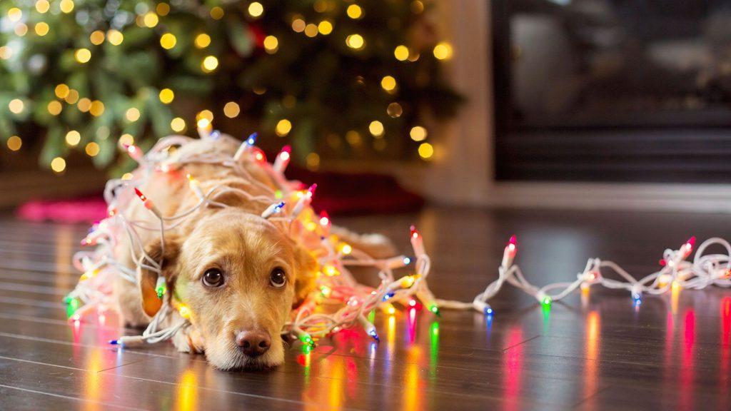 mascotas-adornos-navidad-xxxx80