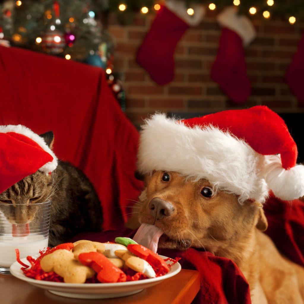 peligros-de-navidad-para-perros-y-gatos