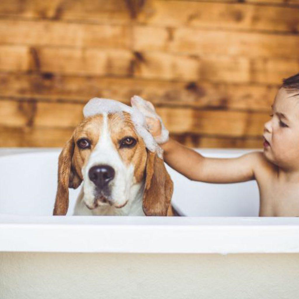 razas-de-perros-para-ninos