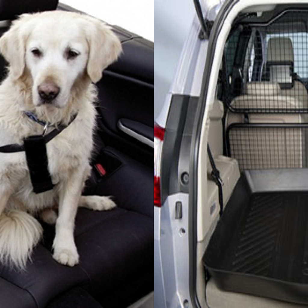 viajar-con-mascotas-en-el-coche