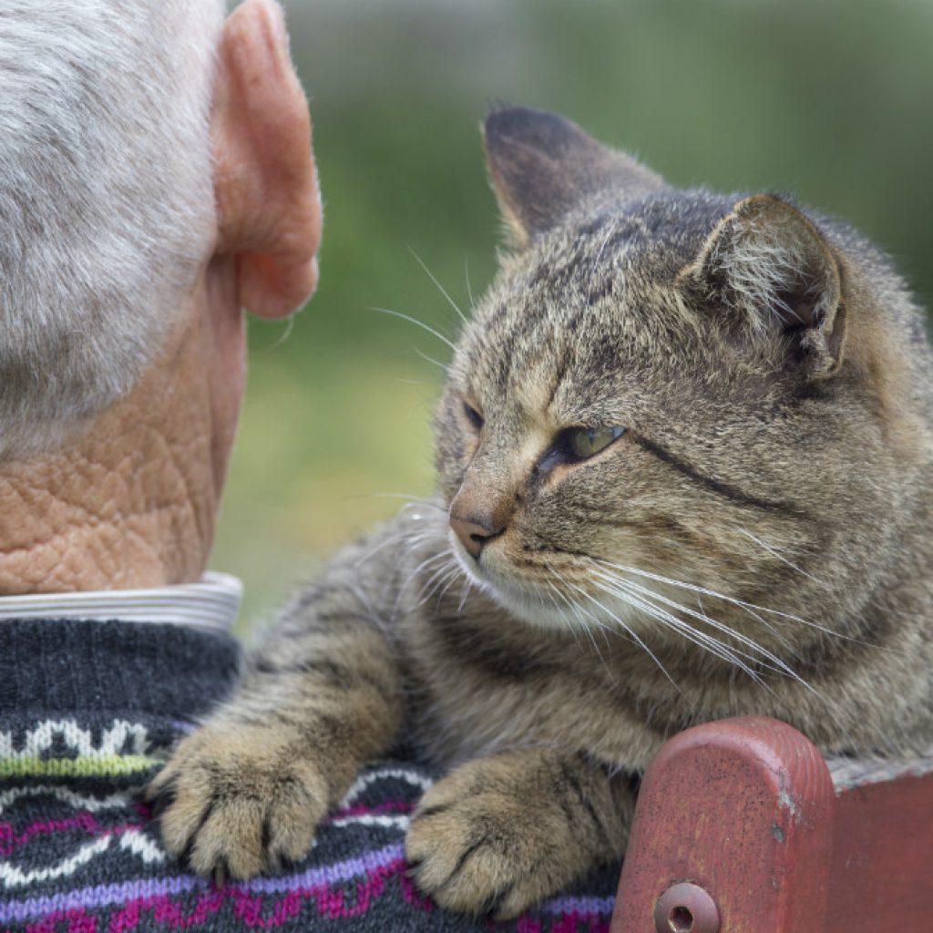 los-beneficios-de-los-gatos-en-personas-mayores