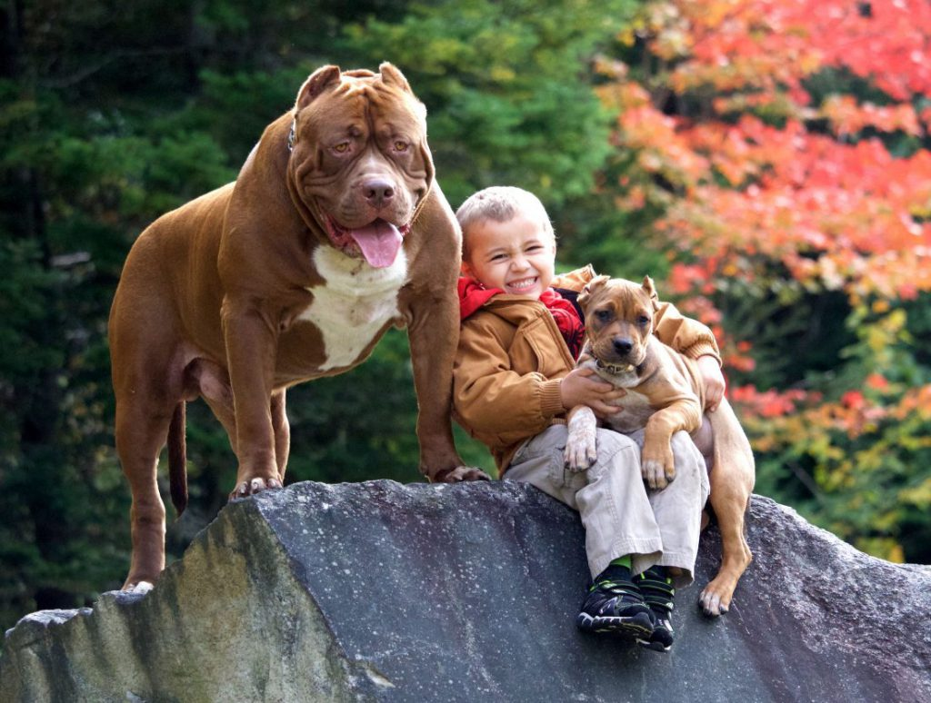 caters_pitbull_and_children_friends_13-1100×831-1