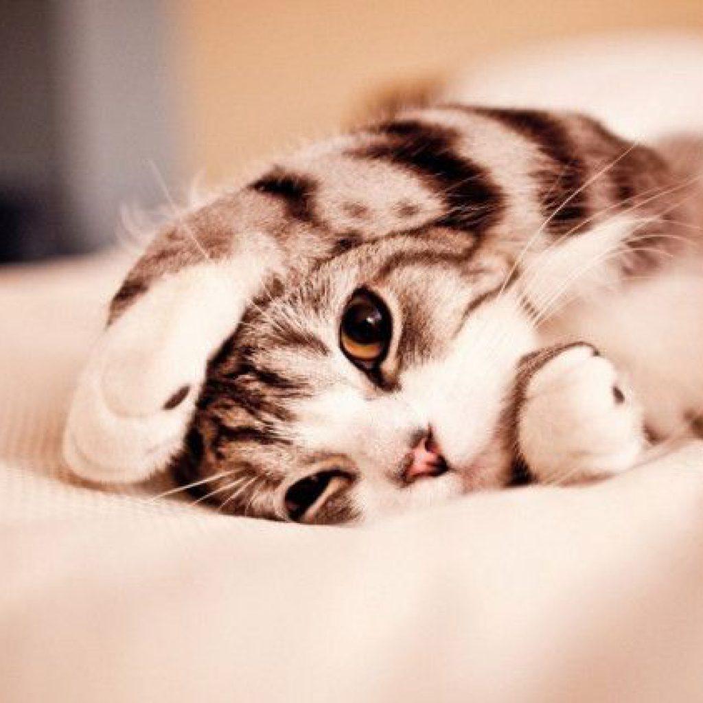gatos-cariosos