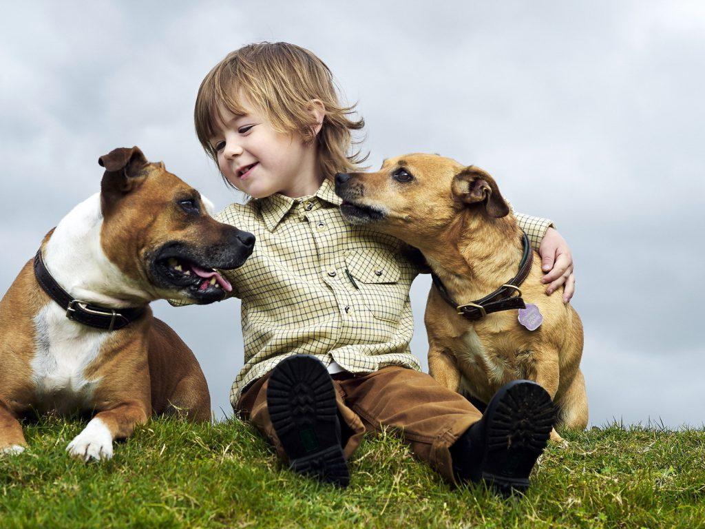 nino_con_perros