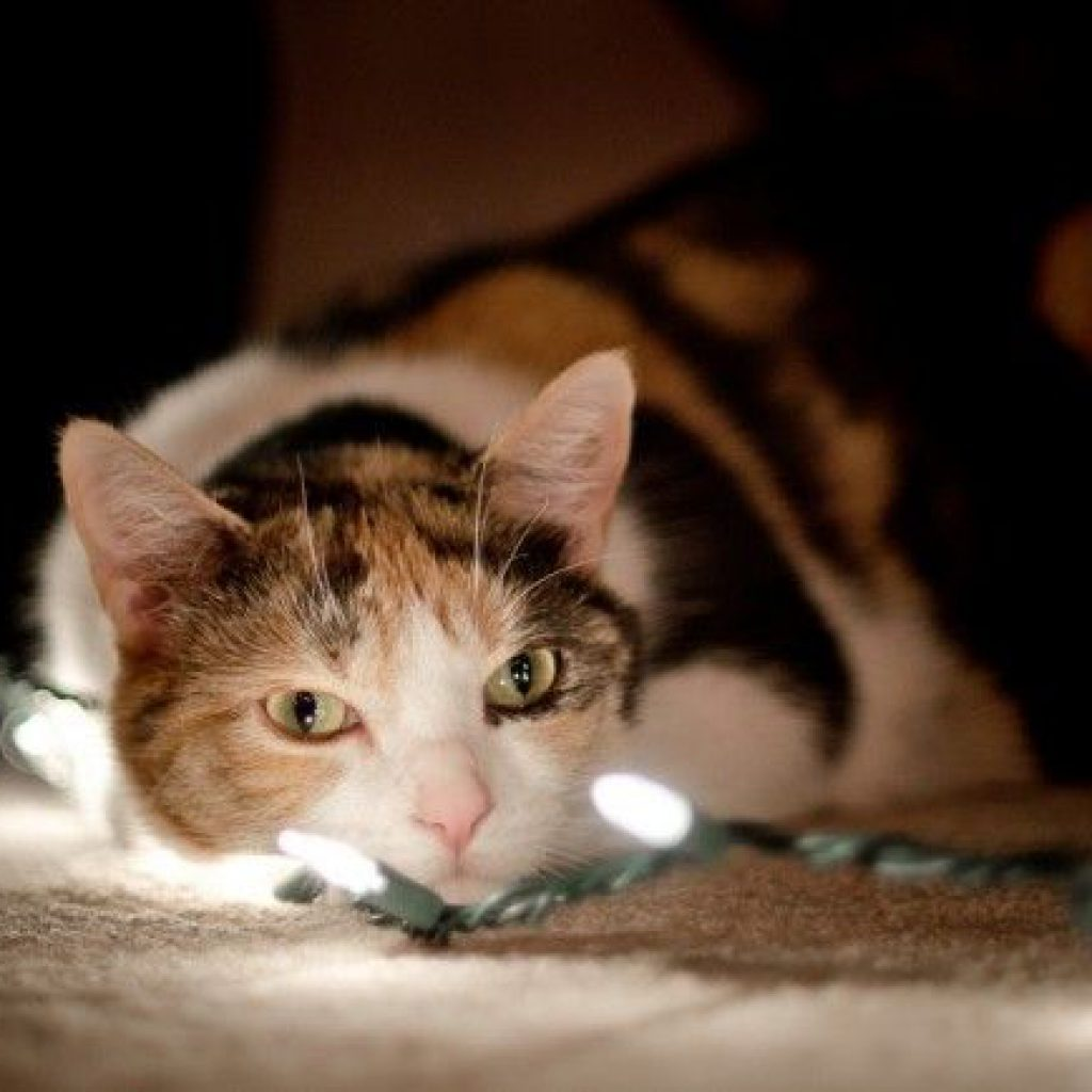 gato-navidad-seguras-luces-art