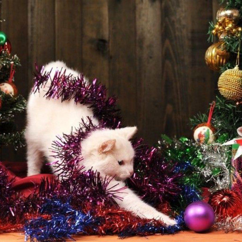 gatos-peligros-navidad-cuidados-art