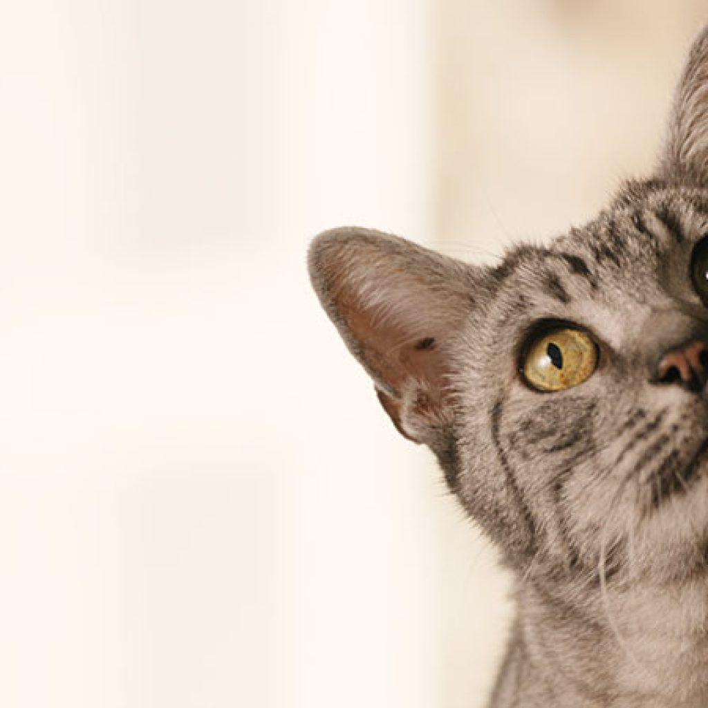 banner-cat-behaviour-curious