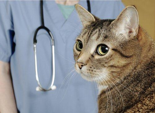 veterinario-en-casa
