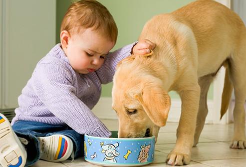 bebe-mascota