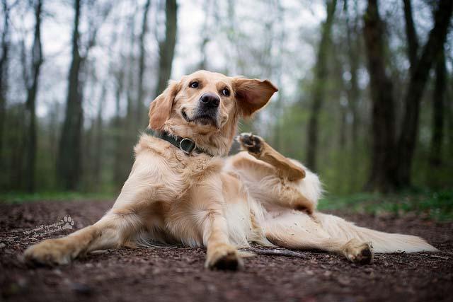 enfermedades-de-la-piel-en-perros
