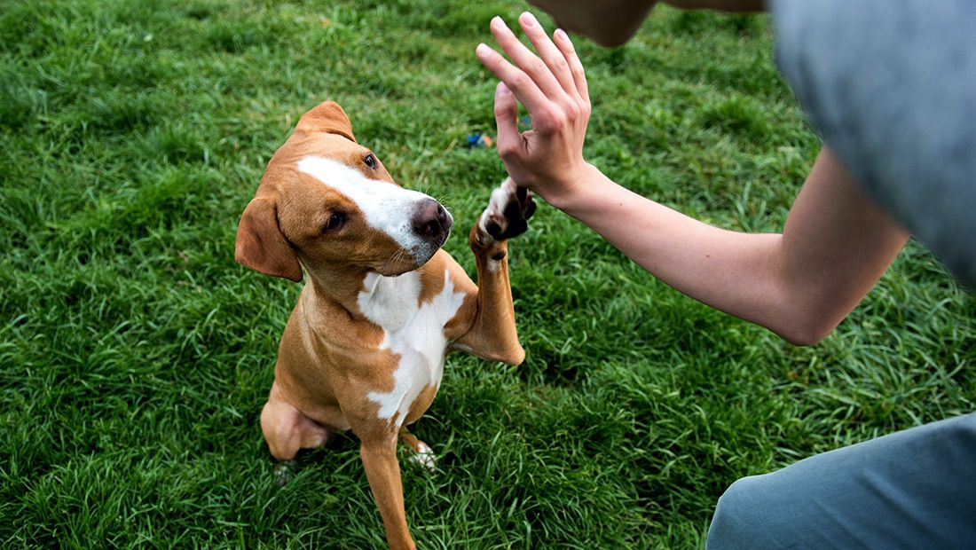 fan-animal-centros-de-rehabilitacion-para-perros-1